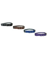 Striped Dog Collar 2.5 cm - ZooGo